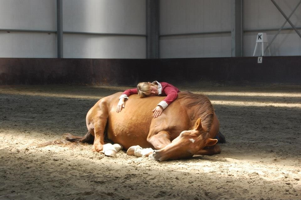 laying_horse